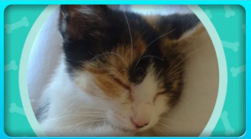 Cat Sitting Pet Care Home Business